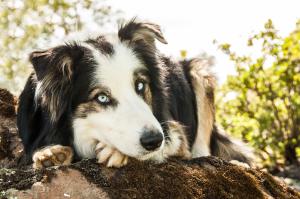 Riley, a former foster dog.